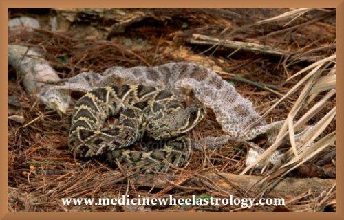 Scorpio (Snake)