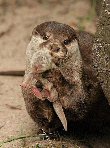 otter-mama